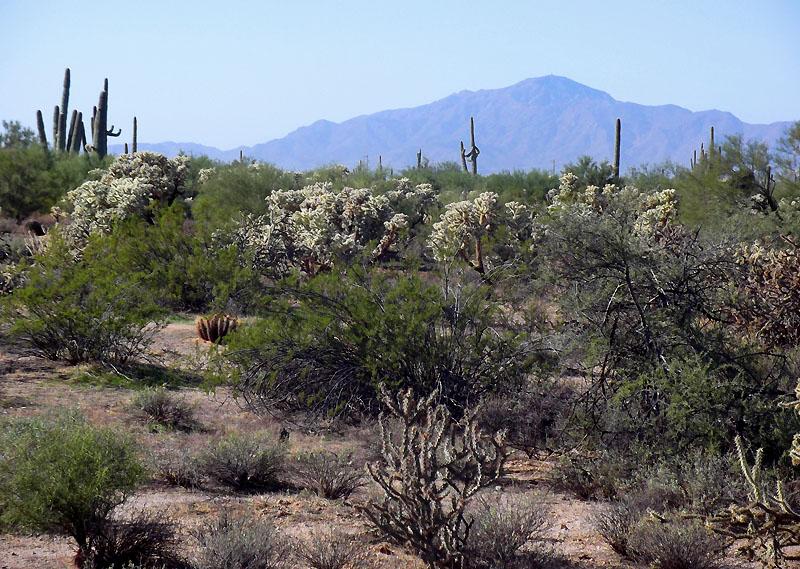 Desert holyland