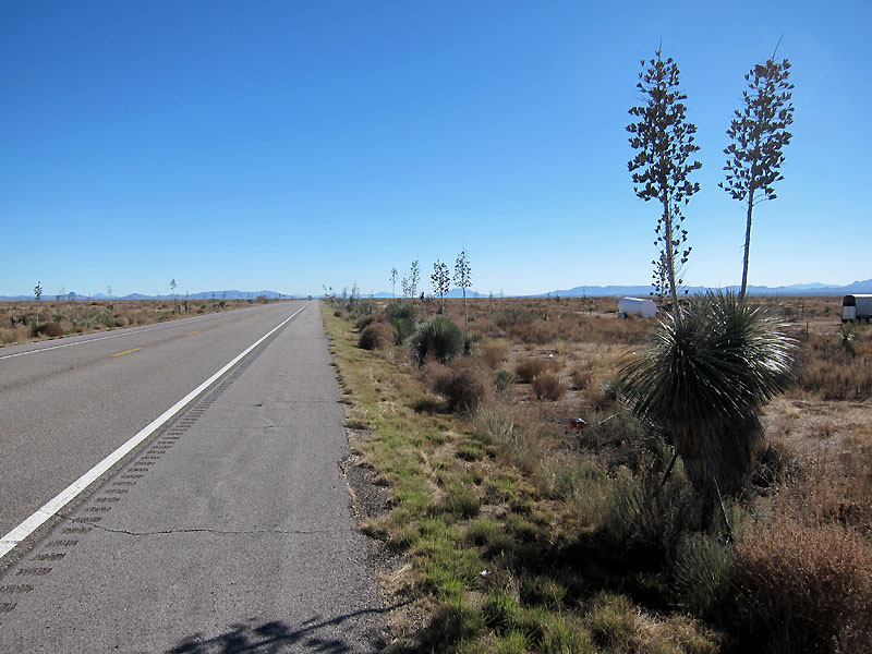 Stands of Joshua trees on US191